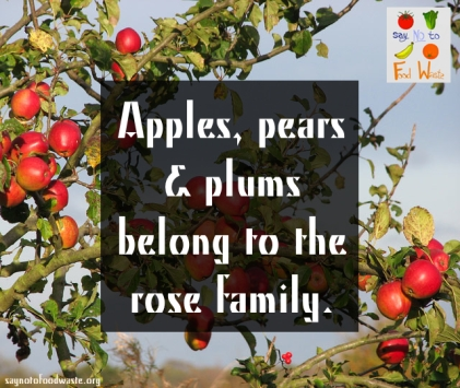 apples.saynotofoodwaste.good.happy.sustainable.saynotofoodwaste.love.give.care.foodquotes.foodfacts.fun.