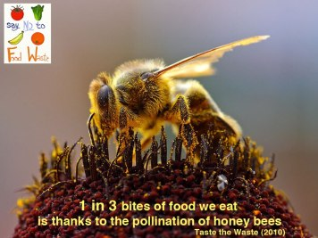 Help the Bees!!
