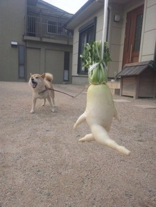 Daikon radish dancer
