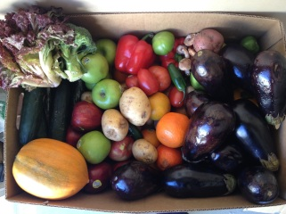 saynotofoodwaste.food.health.sustainability.happy.growth.love.earth