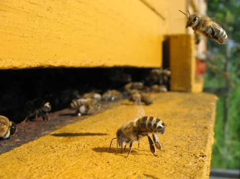 honeybee.saynotofoodwaste.sustainable.agriculture.food.foodsecurity.hunger.happy.share.donate.give