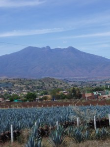tequila.agave.mexico.saynotofoodwaste.sustainability.share.care.give.green.spirits.