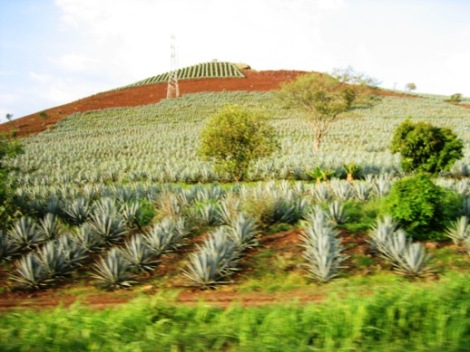 Tequila.greenfields.sustainability.saynotofoodwaste.knowledge.education.sharing.caring.love