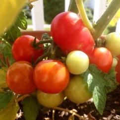 saynotofoodwaste.bitesizedwisdom.blog.sustainable.happy.healthy.green.future.food.nofoodwaste1