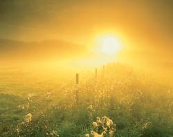 saynotofoodwaste.sunshine.wisdom.bitesized.happiness.dream