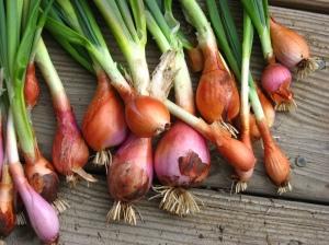 produce onions