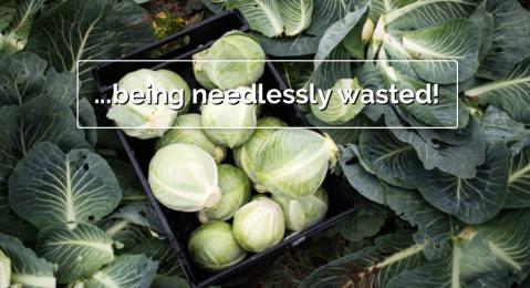 saynotofoodwaste.waste.stop.foodis.chrisking.uk.activism.foodwaste.sustainability.2