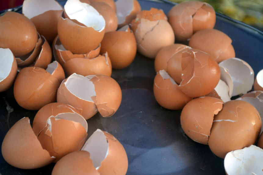 eggshells.saynotofoodwaste.uses.sustainable.1