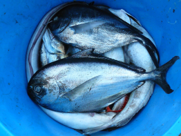fish.saynotofoodwaste.sustainable.global.seafood.food.foodwaste.1