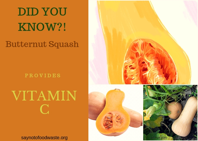 butternutsquash.didyouknow.saynotofoodwaste.local.sustainable.seasonal.1