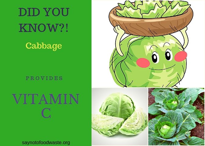 cabbage.didyouknow.saynotofoodwaste.local.sustainable.seasonal.1