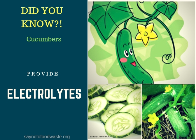 cucumbers.didyouknow.saynotofoodwaste.local.sustainable.seasonal.1